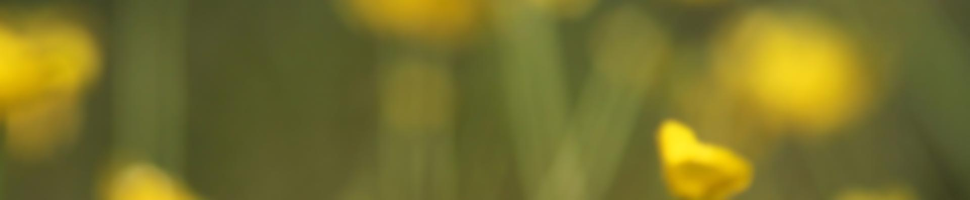 Ekokampaamo-parturi Hiusmeri